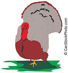 Turkey on a white background