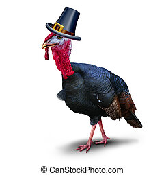 Turkey pilgrim character on a white background as seasonal thanksgiving bird wearing a hat as an autumn symbol for harvest time celebration.
