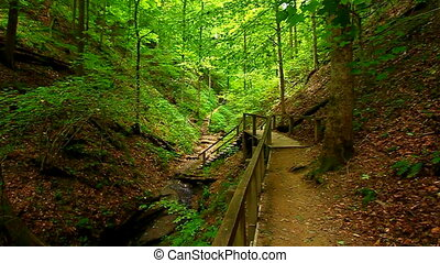 Turkey Run State Park Bear Hollow - Rugged hiking trail...