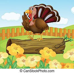turkije, binnen, hout, boven, omheining