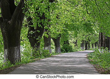 path in park at summer