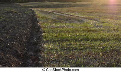 agricultural plowed field - turn view of evening sunlight...
