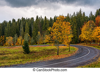 turnaround of the forest road. beautiful autumn nature...