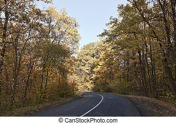 Turning the empty road in the autumn forest