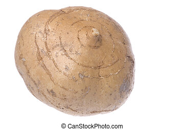Turnip Isolated - Isolated image of a fresh turnip.