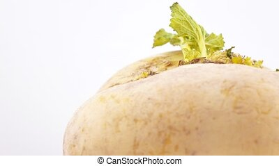 Turnip with a green leaf - Large turnip with green leaves