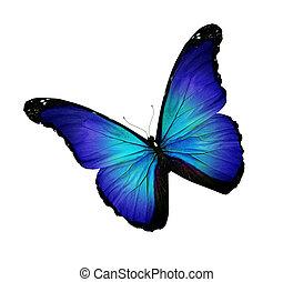 turquesa, borboleta, azul, isolado, escuro, branca