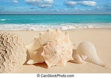 turquesa, caraíbas, starfish, conchas, tropicais, mar areia