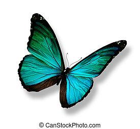 turquesa, mariposa, aislado, blanco
