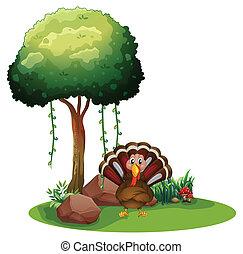 turquie, sous, arbre, rochers