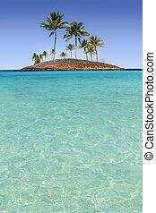 turquoise, ø, træ, tropisk, håndflade, paradis, strand