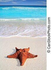turquoise, antilles, etoile mer, exotique, plage sable