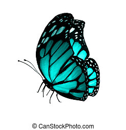 Turquoise butterfly , isolated on white