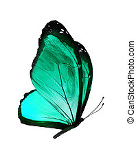 Turquoise butterfly, isolated on white