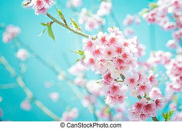 turquoise, fleur, tonalité, fleur, cerise, foyer, sakura, fond, doux, ou