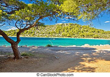 Turquoise pine tree beach of Croatia, Island of Murter in Dalmatia