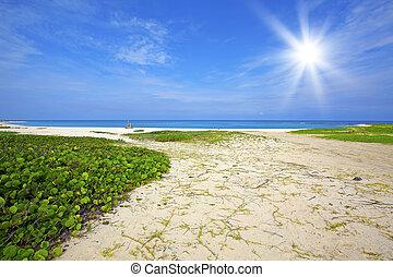 Boca Grandi beach - Turquoise water and white sand at Boca ...