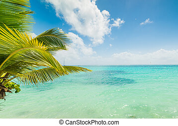 Turquoise water in Sainte Anne shore in Guadeloupe, Caribbean sea