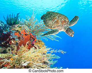 Turtle swimming underwater among the coral reef