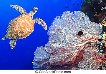 Turtle and coral