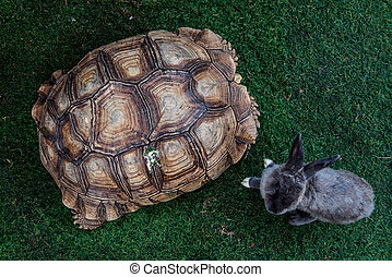 turtle and rabbit, reptiles animal in the garden