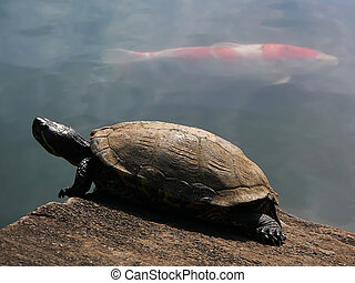 turtle and red fish