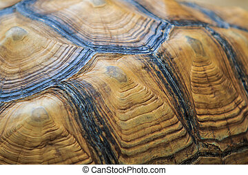 Turtle background