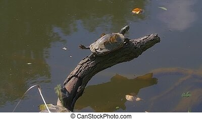 Turtle by the lake