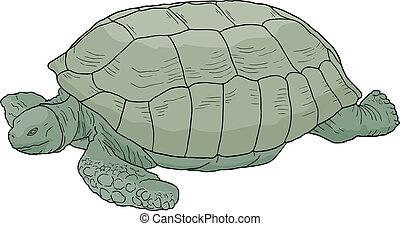 Creative design of turtle cartoon
