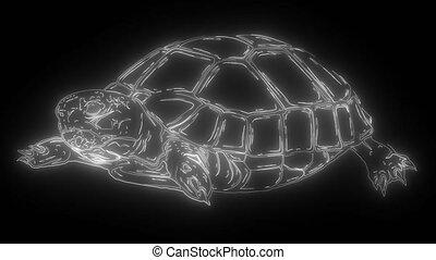 land Turtle digital neon video