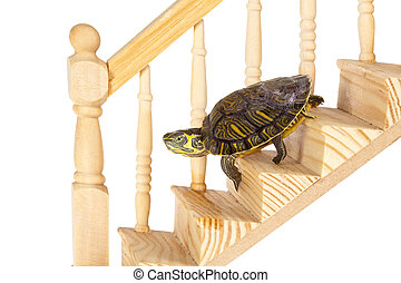 Funny turtle going down on a wooden staircase