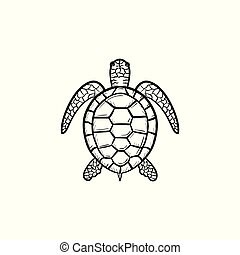 Turtle hand drawn sketch icon.