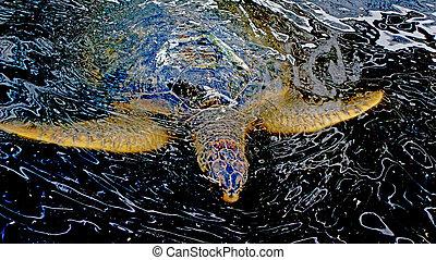 turtle, in, a, bauernhof