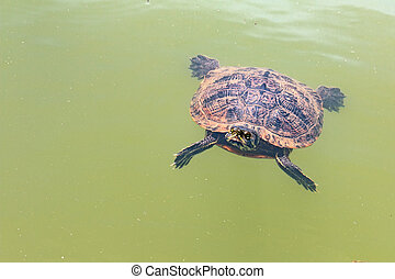 turtle in lake