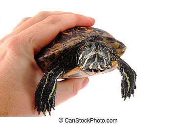 Turtle in the hands