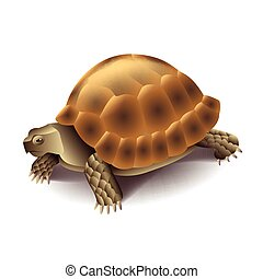 Turtle isolated on white vector