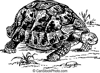 Turtle moving slowly down the ground