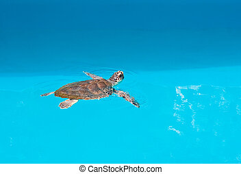 turtle, national, park., kroatien, safari, brijuni