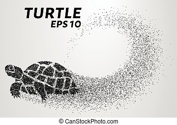 Turtle of the particles. Turtle consists of small circles....