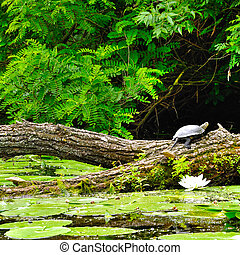Turtle on a log in a forest