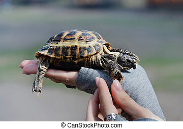 turtle on hand close up. The concept of human friendship with the animal world. Helping needy animals.