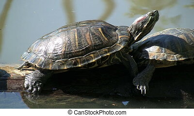Turtle On Log - Turtle on log.