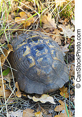 Turtle on the ground in forest