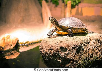 Turtle on the Rock