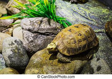 Turtle on the rocks in the terrarium Vinpearl Island