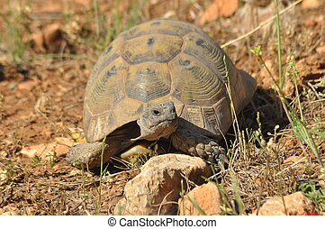 Turtle on the rocky and sandy desert. Gad Soaking up the...