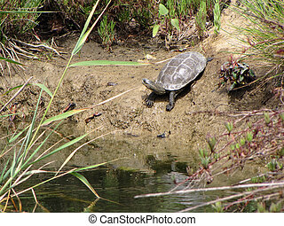 Turtle on the shore of the river