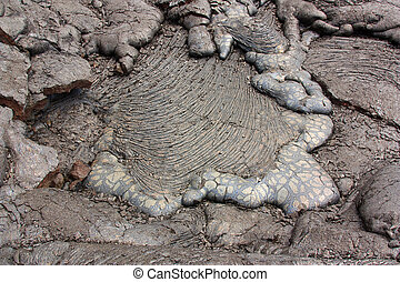 Turtle pattern lava