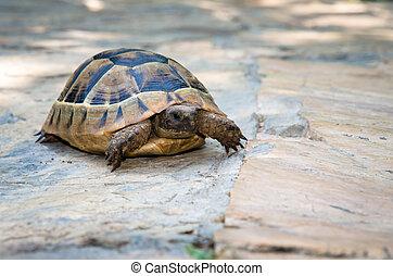 turtle - brown turtle reptile animal image