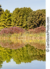 Turtle Pond Reflections